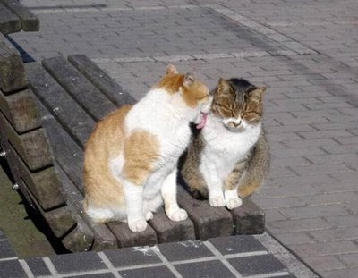 Cats in Love Pictures