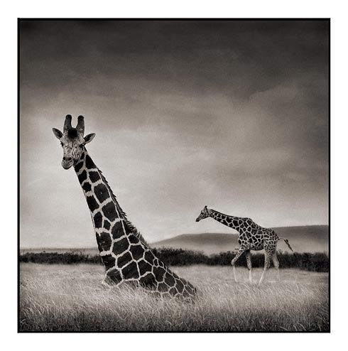 Nick Brandt Creative Wildlife Photography Seen On www.coolpicturegallery.us