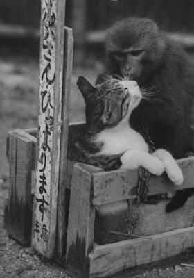 http://3.bp.blogspot.com/_gTJMEP-c2fo/STk_lcAKlQI/AAAAAAAAIeA/uW71awpT9yg/s400/cat+and+monkey+pic.jpg
