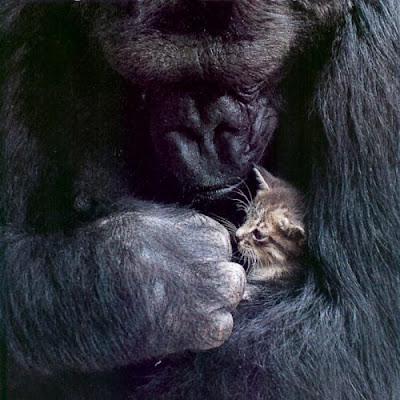 http://3.bp.blogspot.com/_gTJMEP-c2fo/STk_s_MMf2I/AAAAAAAAIeQ/jZEPGL8SBrQ/s400/kitten+loves+money.jpg