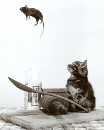 Funny/Cute Animal Pics Cat-%26-mouse-12