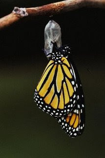 Leaving-Butterfly-Leaving-Cocoon-Leaving