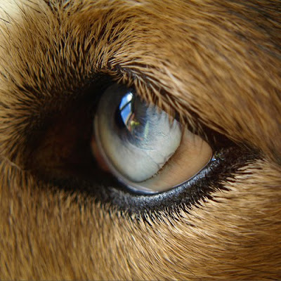 Many type of eye dogs