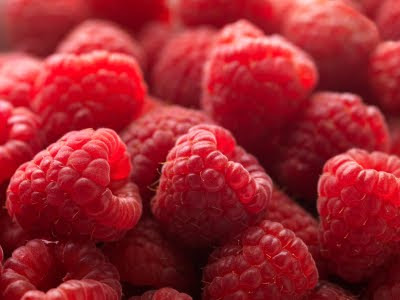 Rubus Berry Plants