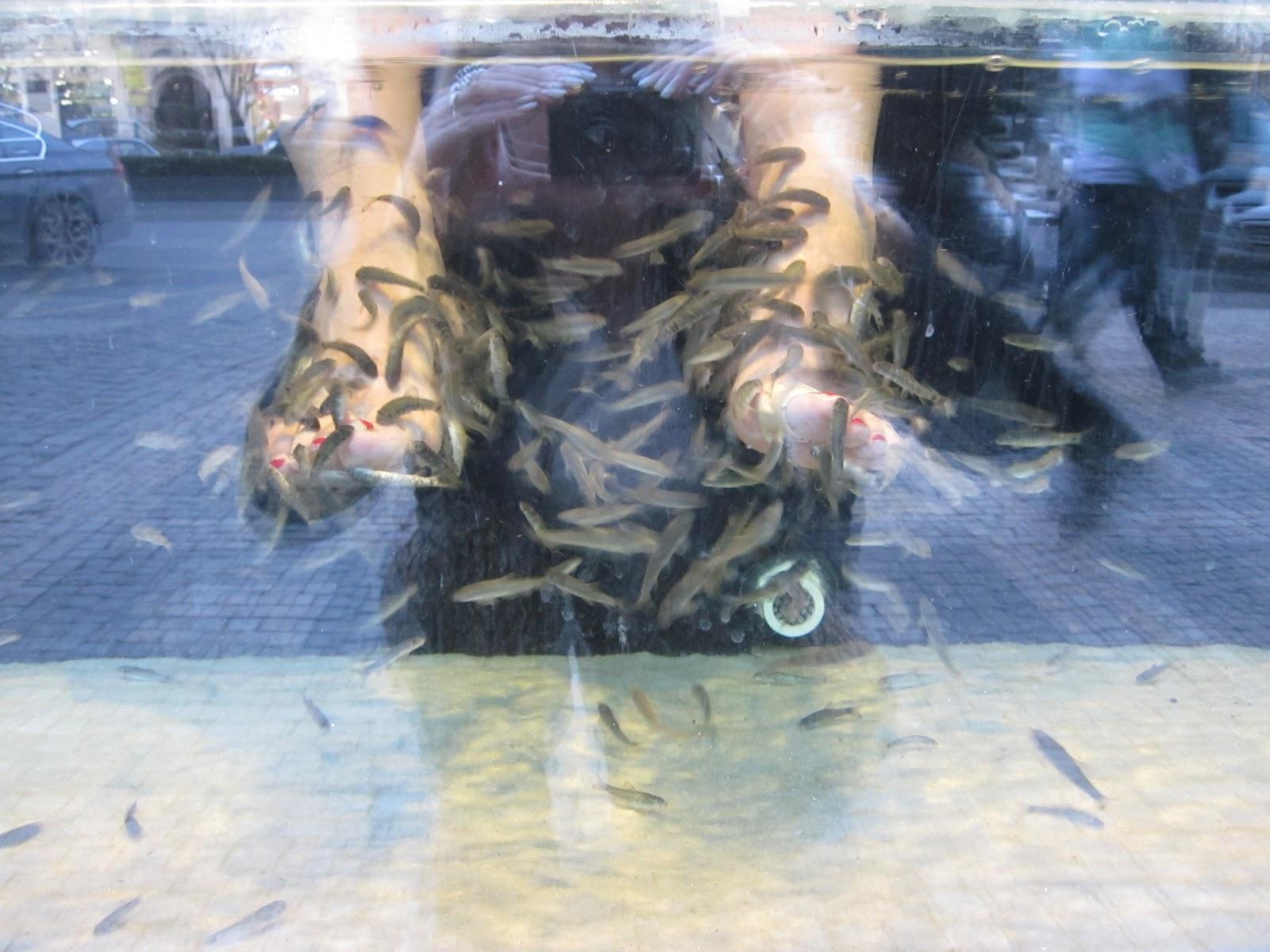 My drivel piranha pedicure for Fish pedicure utah