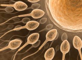 [sperm+sayisini+artirma.jpg]