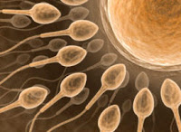 sperm glendirici yiyecekler
