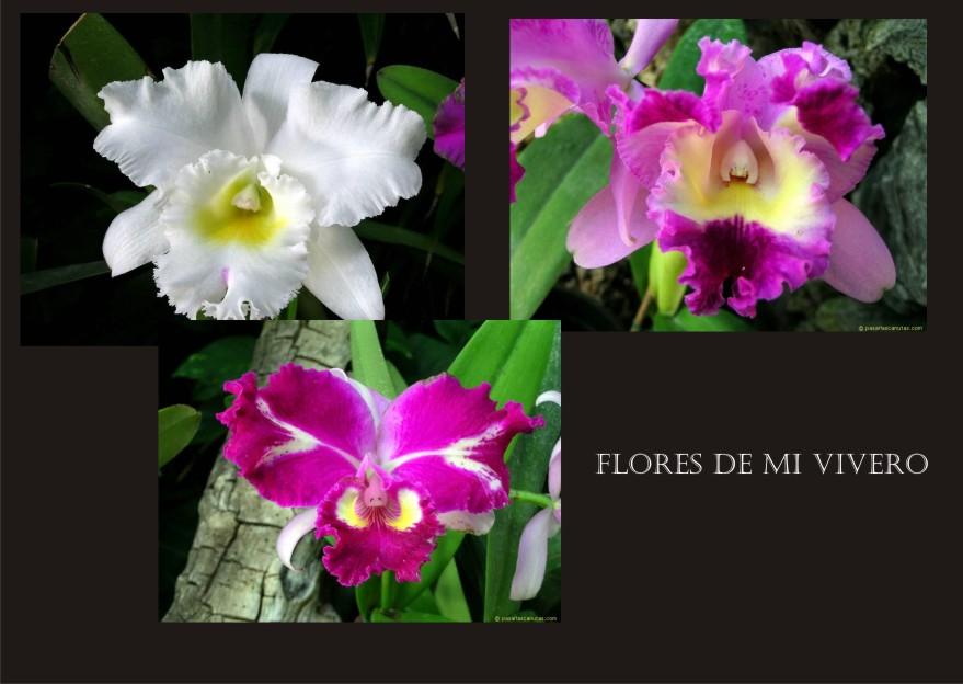 Crisandru for Viveros de plantas en concepcion