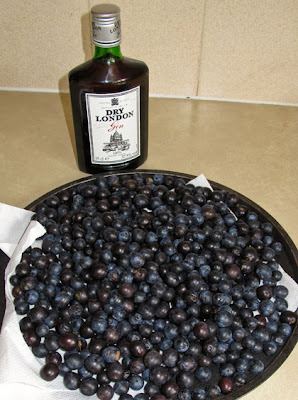 Allen's sloe gin production line begins!