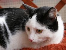 U Beaty w zabawie fotograficznej wylosowałam koci kalendarz:)
