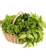 Top 10 Herbs to Manage of Fibroids