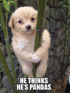 Lol animals pics