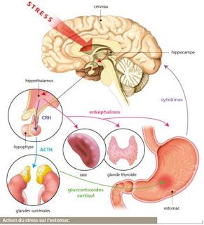 Minden ami pszichológia és táplálkozás: Mi a CRF?