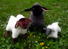 3 little sheep
