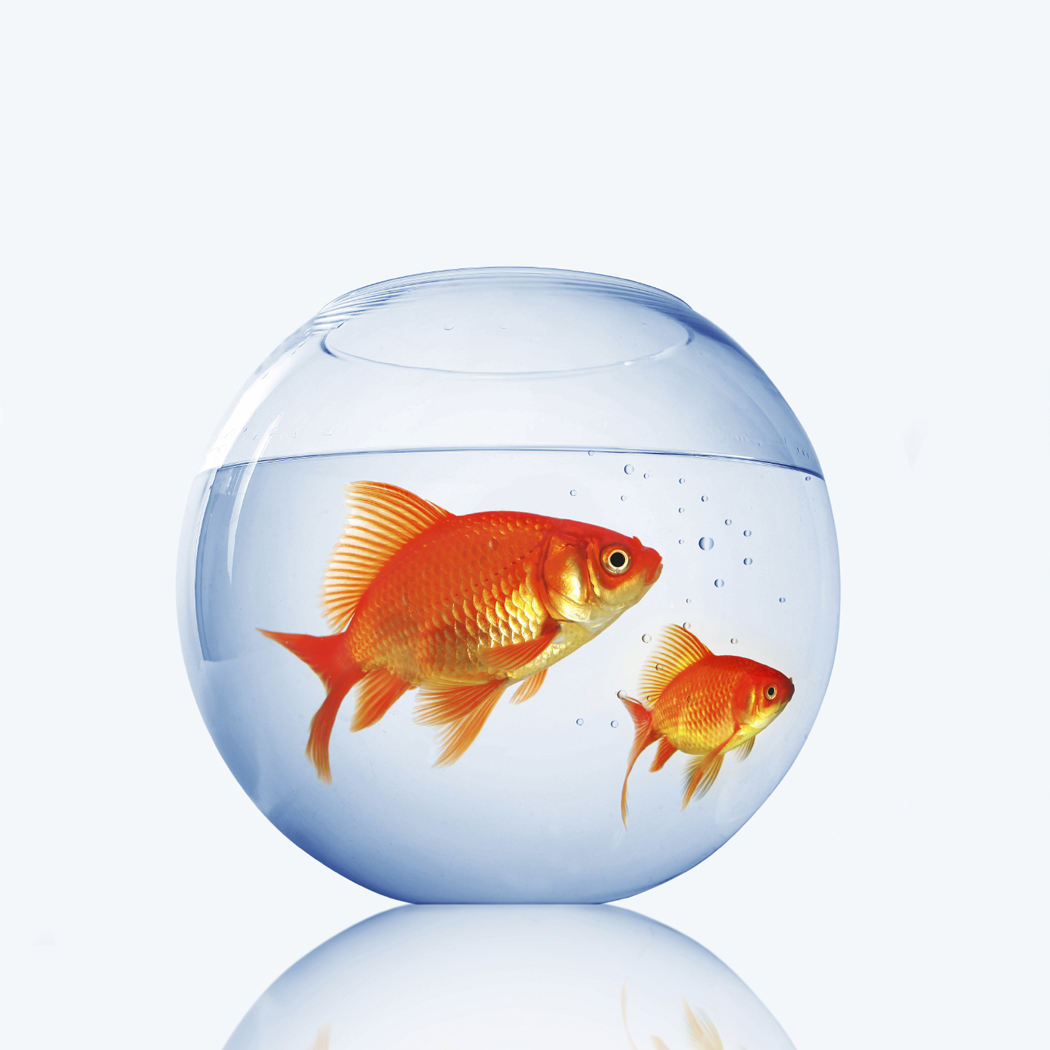 Reading lovers goldfish secrets and benefits for Fish bowl pictures