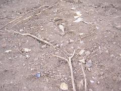 Ecocidio en Cerro Venezuela. Estado Anzoategui