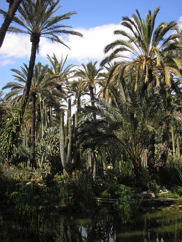 Mis Viajes por el Mundo: Jardin Huerto del Cura, Elche