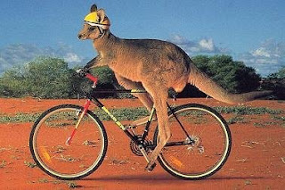 KangarooBicycling_Large.jpg