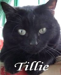 Tillie