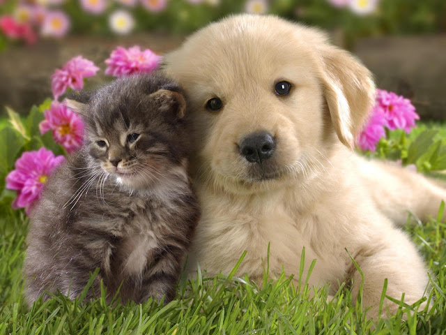 Kitten and Puppie Seen On www.coolpicturegallery.us