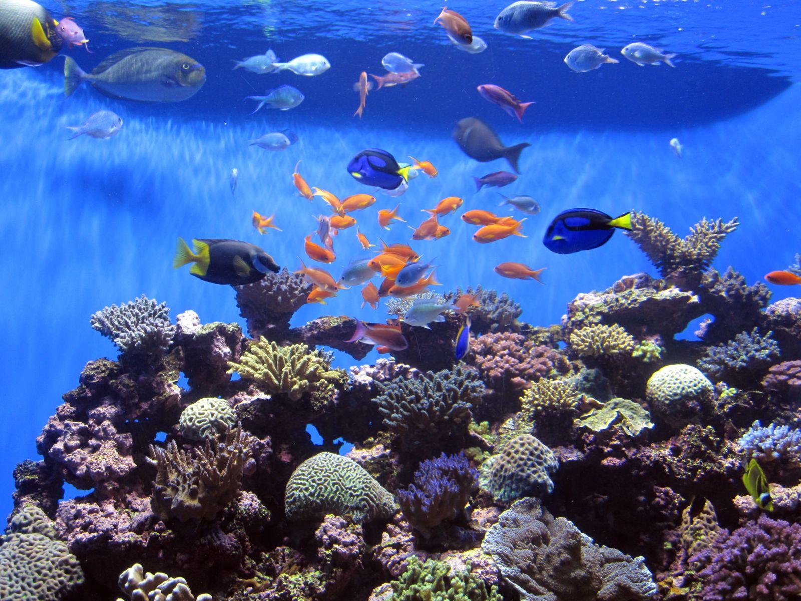 The Hawkins Family Birch Aquarium