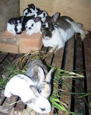 Anak kelinci belajar makan