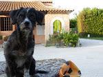 Gratuit pour les chiens hors juillet-août