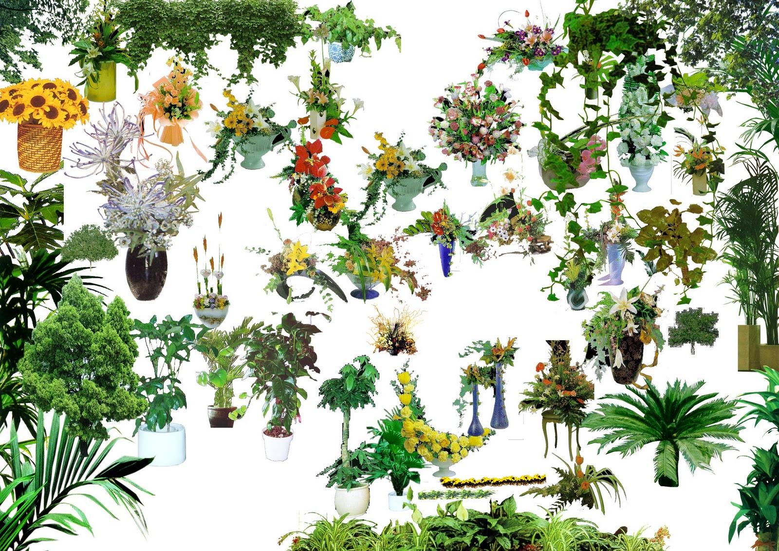 TREE%20PSD%2005.jpg