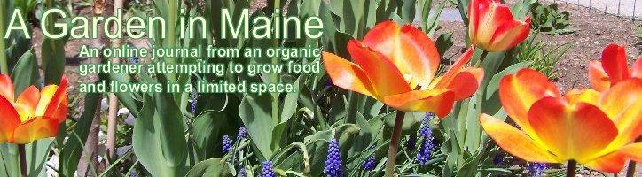 A Garden in Maine