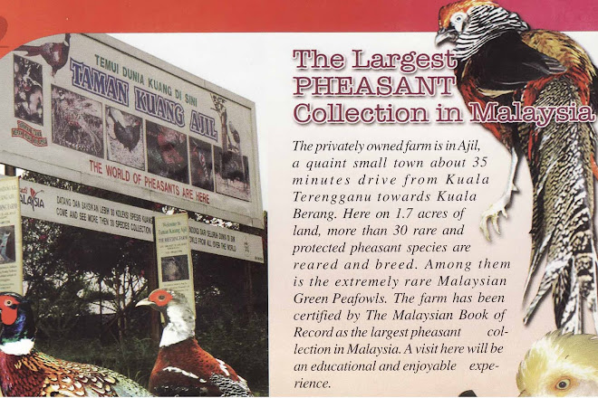 THE LARGEST PHEASANT IN MALAYSIA