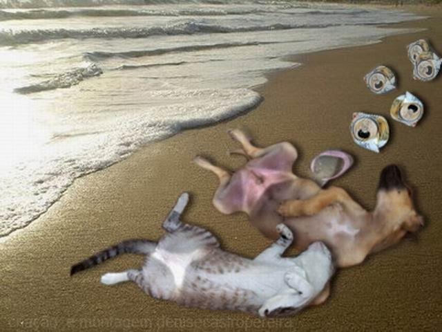 Se for à praia, não beba!