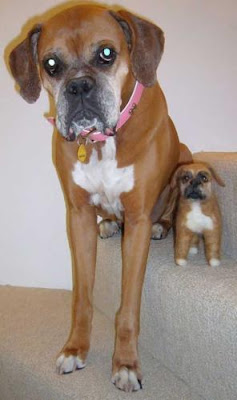 Dogs with their small versions
