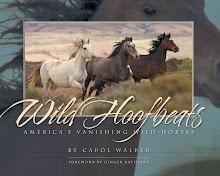 Buy Wild Hoofbeats