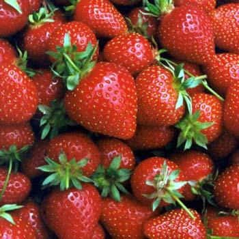 http://3.bp.blogspot.com/_glNm8GHhHEQ/TNOUH0j3wQI/AAAAAAAAAFI/5xHTkeKL82c/s1600/strawberries.jpg