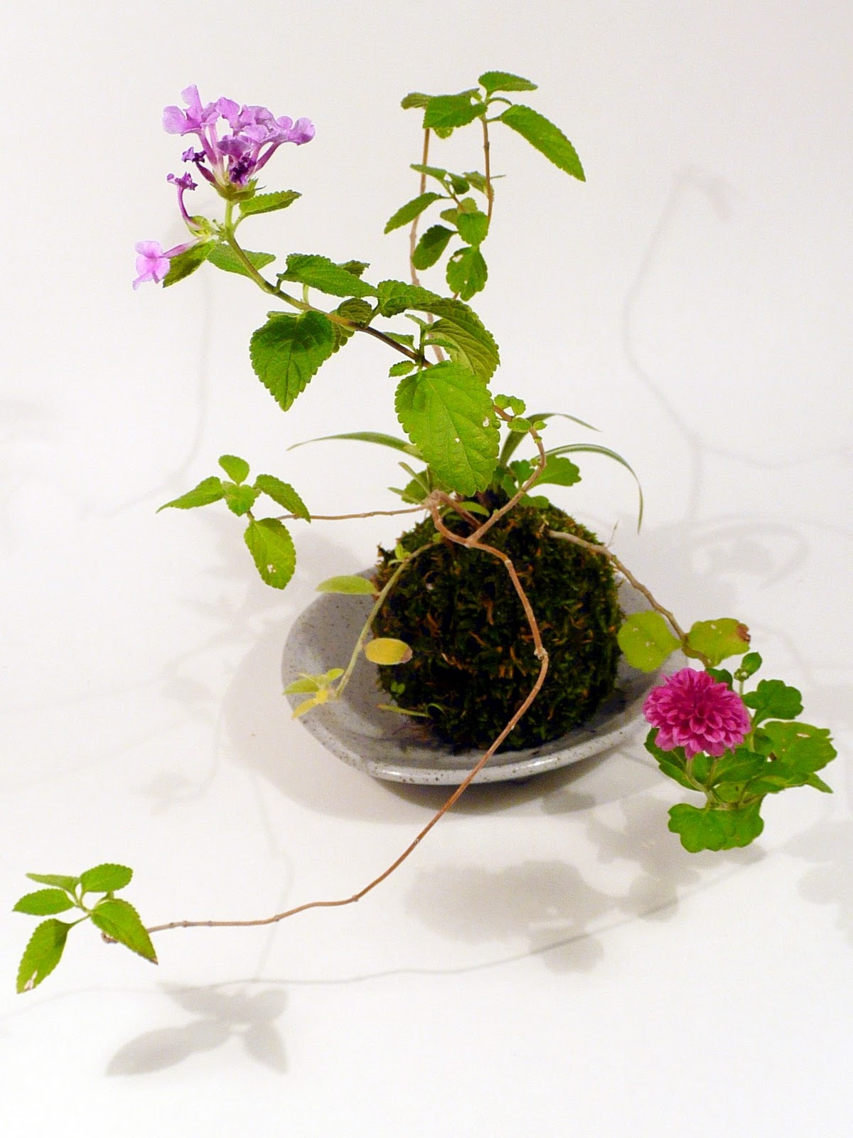 Kokedama On Pinterest String Garden Bonsai And Bonsai Soil