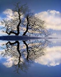 Somos un espejo...