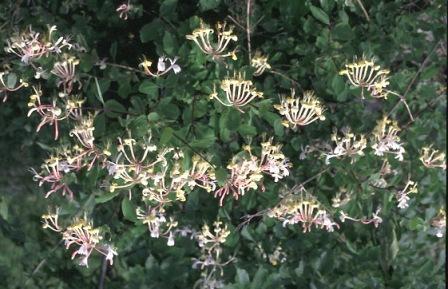 Tapalqueneros en la red feliz primavera - La madreselva ...