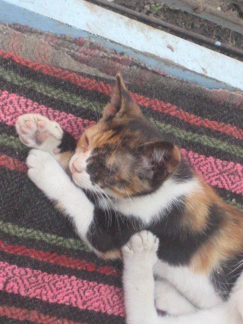 My cat... Olivia