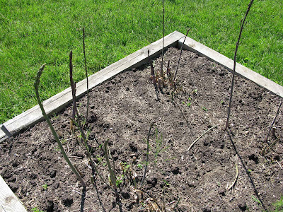 New asparagus bed