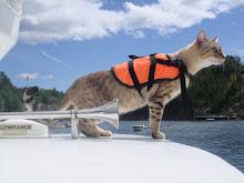 Sommer og båt