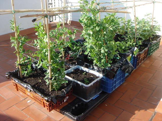 Huerteros el balcon verde - Huerto en la terraza ...