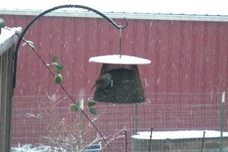 wire bird feeder