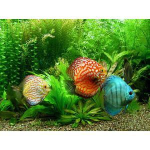 peixes de aquario para iniciantes