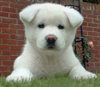Filhote de cachorro 7