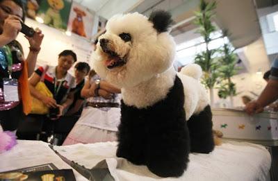Poodle ou panda?