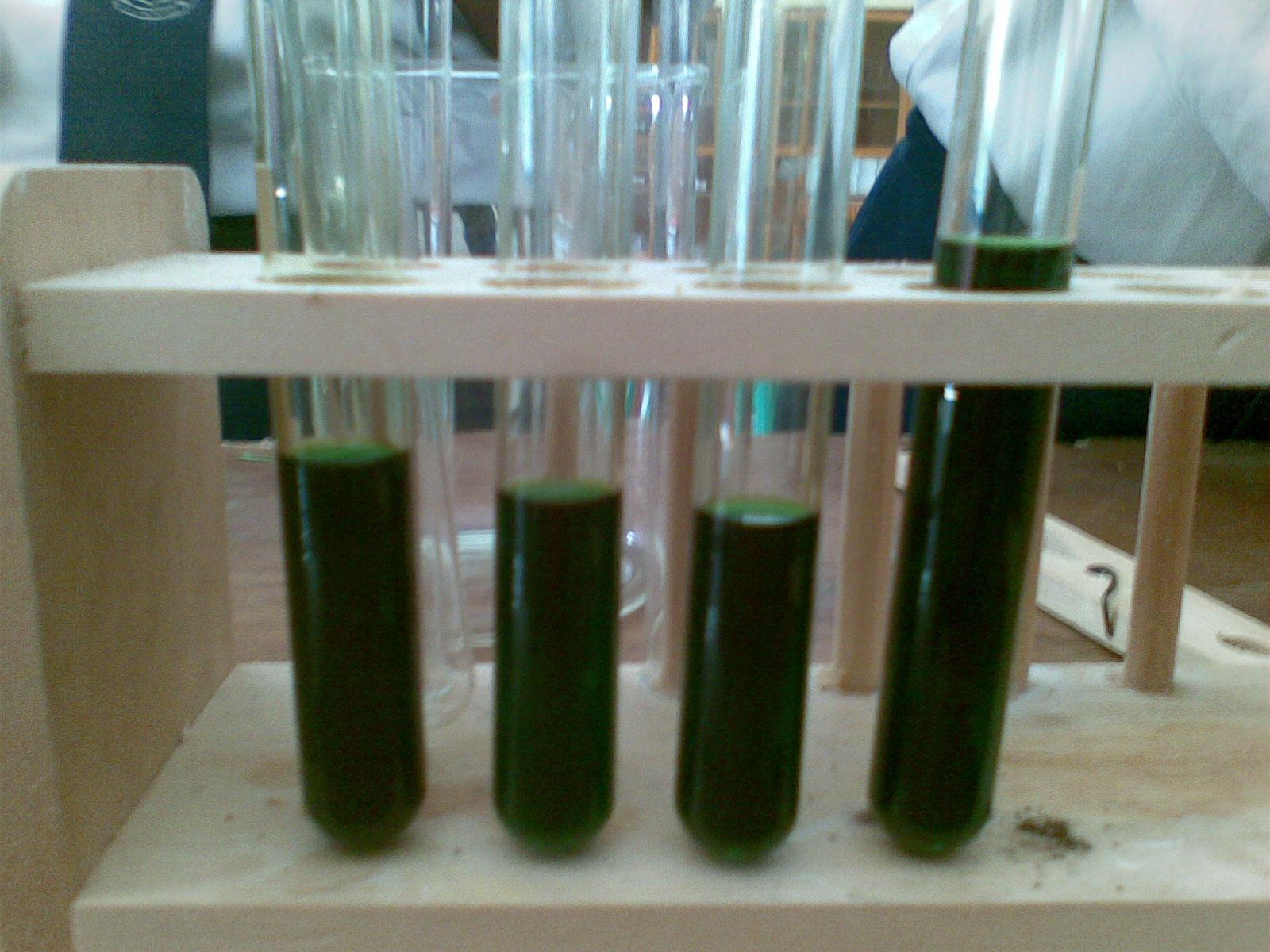 Fotosynteza proces kataboliczny czy anaboliczny 68