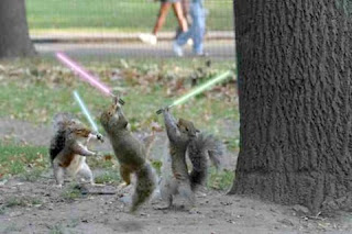 Dark Jedi Squirrels