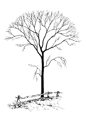 Trees without Leaves Coloring Pages