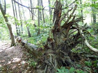 森の生態系
