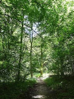 カルネルの森